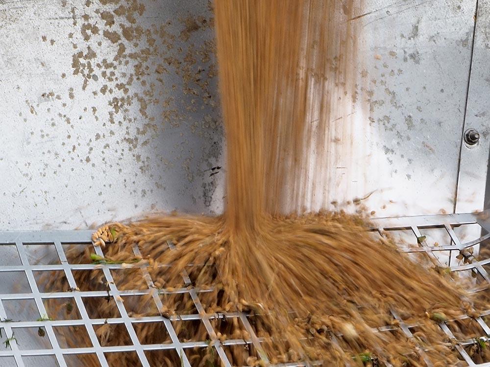 Le Croissant Fertile, arrivée du blé